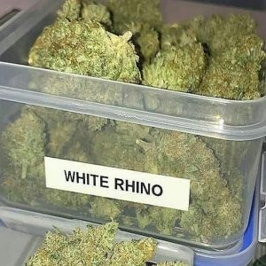 Buy White Rhino Weed Strain UK