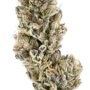 buy purple punch weed uk